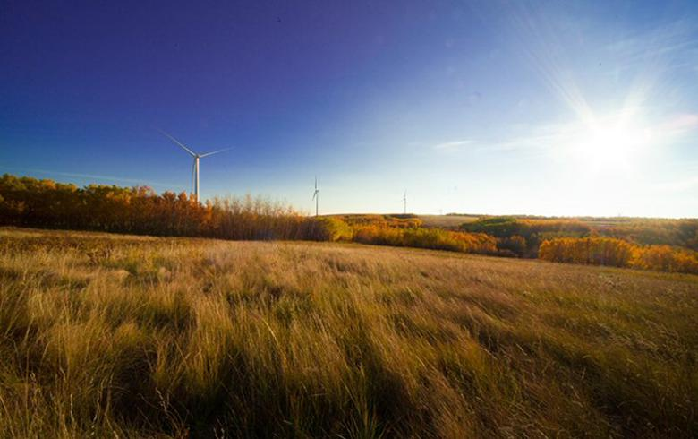 Wind projects of 763 MW win Alberta renewables tender