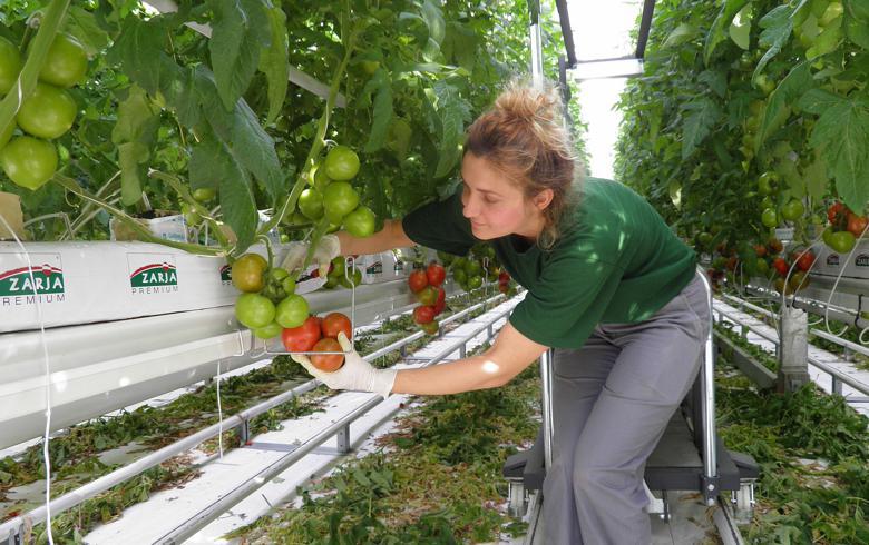 Croatia's Agrokor agri segment 8-mo EBITDA stays well below plan