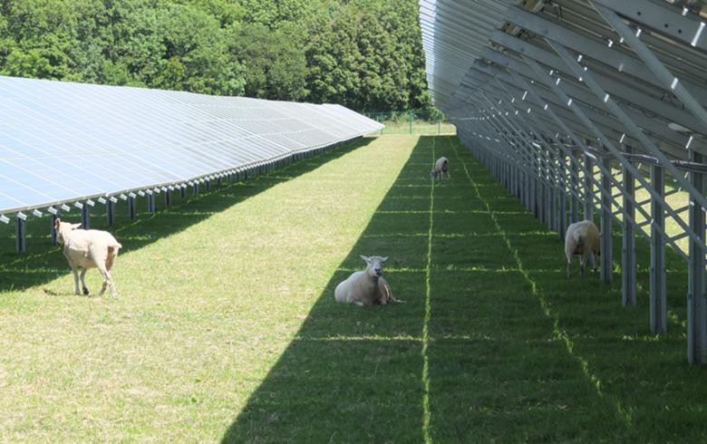 PiP acquires 30 MW of UK solar farms from Trina Solar