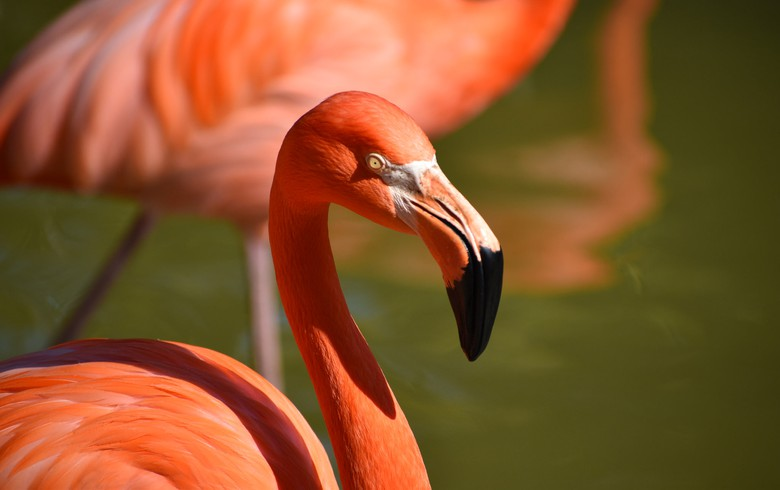 San Diego Zoo turns to EDF Renewables for energy storage