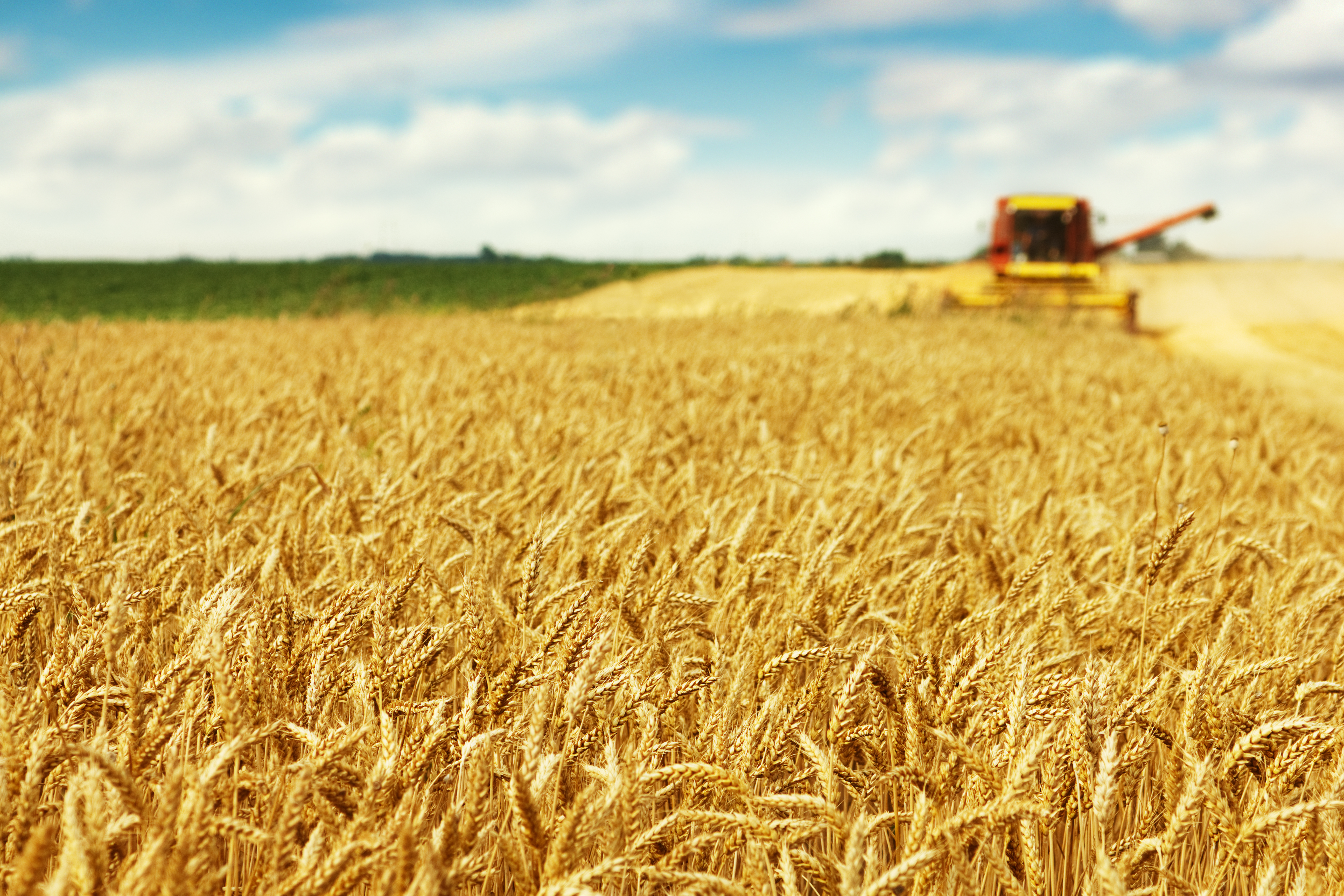 Romania to post higher sunflower, rapeseed, maize output in 2017 - EC