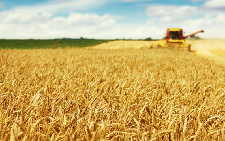 Serbian grain association sees 2015 wheat crop at 2.4 mln t - report