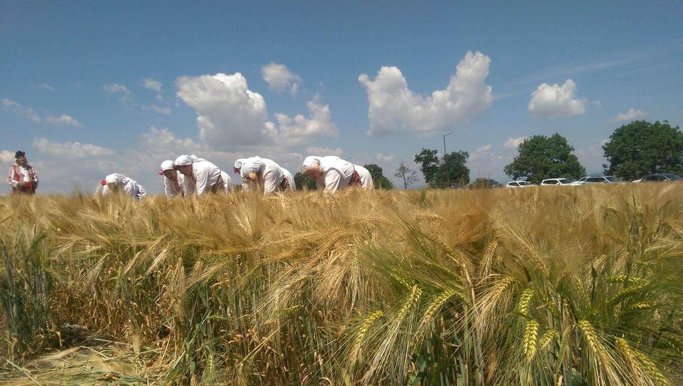 Bulgaria sees wheat output at 5 mln t in 2017