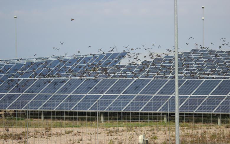 Canadian Solar to ship 164 MW of modules to Spain