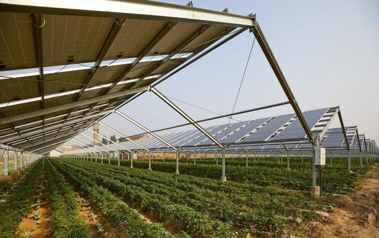 Fintel, MK Group to build 340 mln euro agrivoltaic plant in Serbia