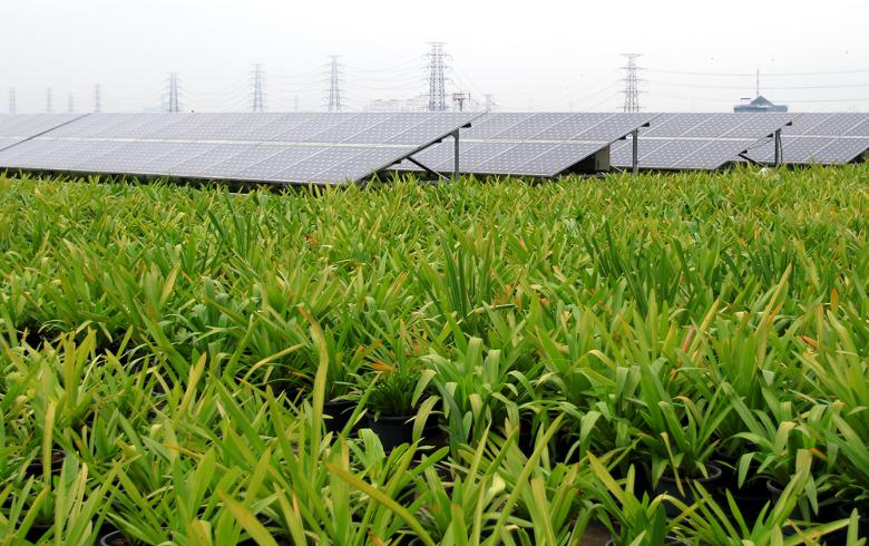 to-the-point: ThomasLloyd investee commissions 27-MW solar park in India