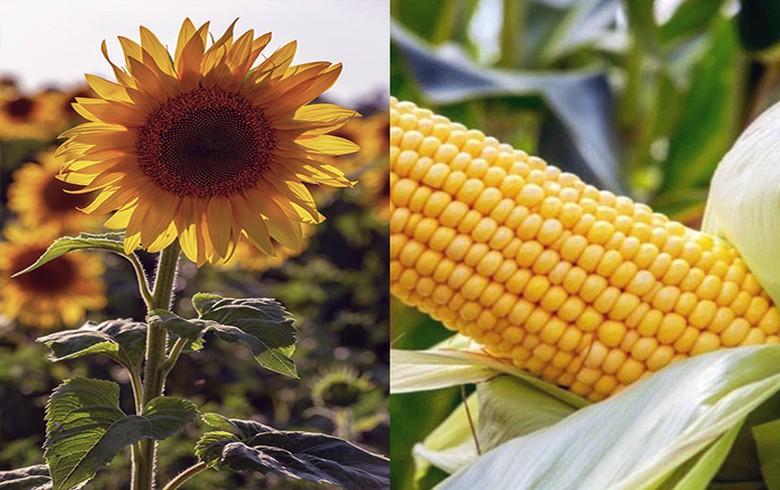 Moldova's 9-mo agricultural output rises 3.2%