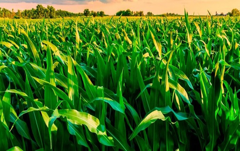 EBRD lending 5 mln euro to Romania's Agricover Credit IFN